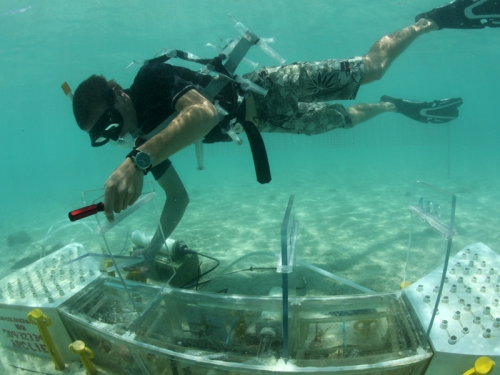 diver underwater with tank