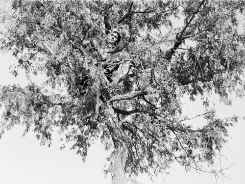Black and white photo of man looking down from tree