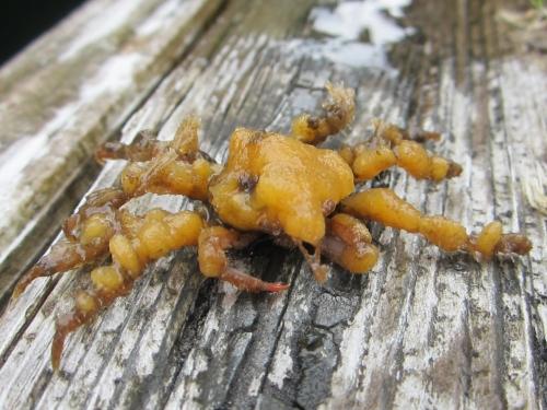A crab on a Ketchikan dock