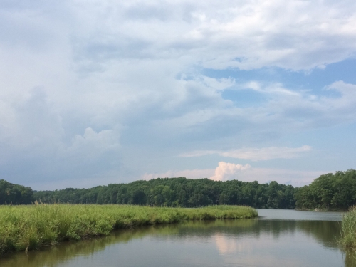 Marsh showing invasive grasses
