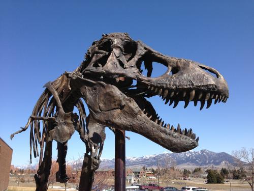 Nation's T. rex