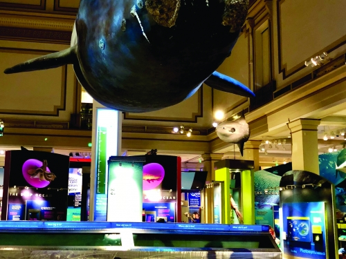 Sleepovers at the National Museum of Natural History