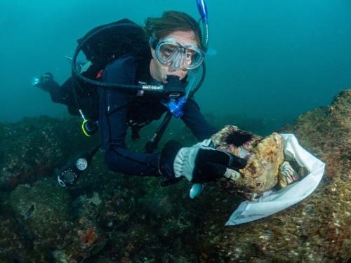 Scuba diver holds sea urchin underwater