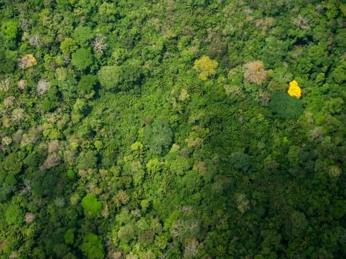 Aerial shot of Forrest