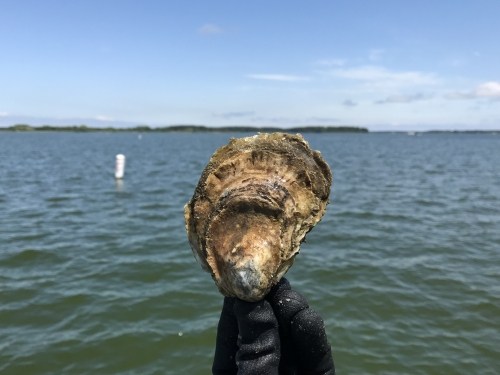 Hand holds oyster in front of body of water