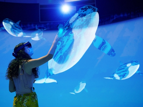 Person interacts with augmented reality version of an orca