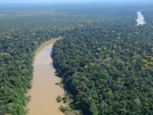 Ariel view of river and surrounding forest
