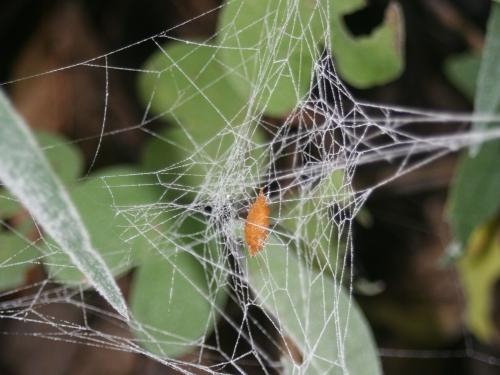 Spider Zombie Wasp