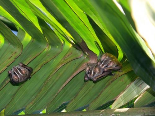Bats in leaves