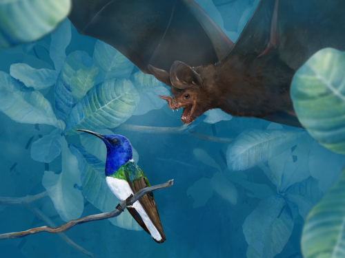 Illustration of bat diving on colorful bird