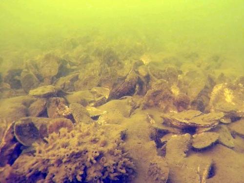 Underwater oyster habitat