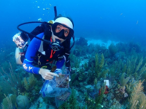 Scientist Maggie Johnson working to monitor coral reef ecosystems in Belize.