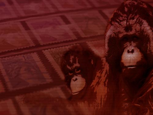 Stylized orangutan illustration.