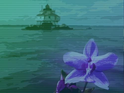 orchid illustration