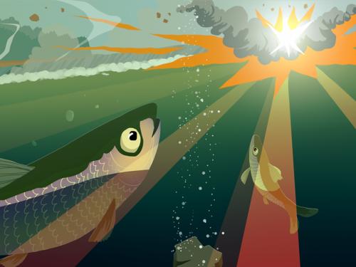 herring illustration