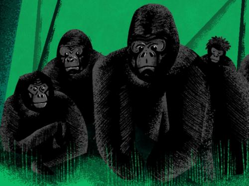 Illustration of gorillas.
