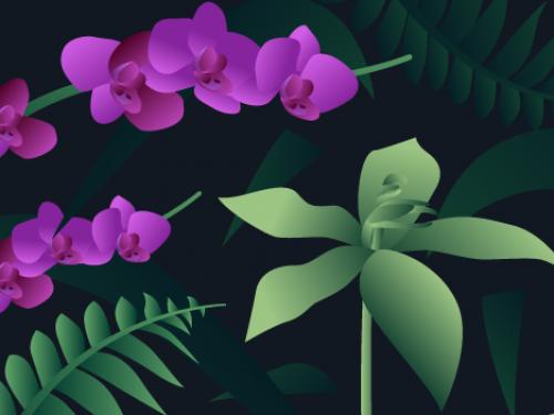orchid illustration.