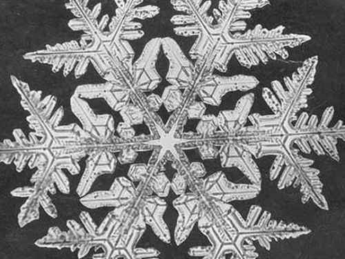 photograph of snowflake crystal