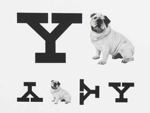 Eye chart with dog
