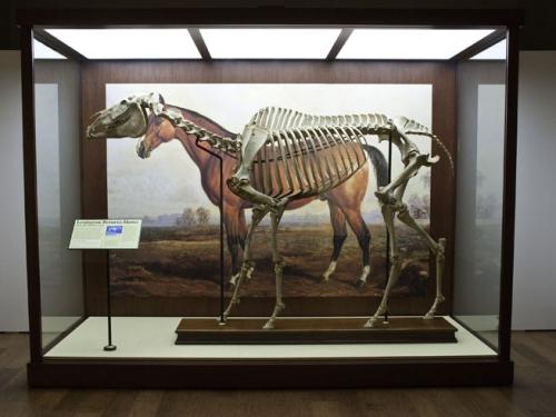 Lexington Racehorse, 1878