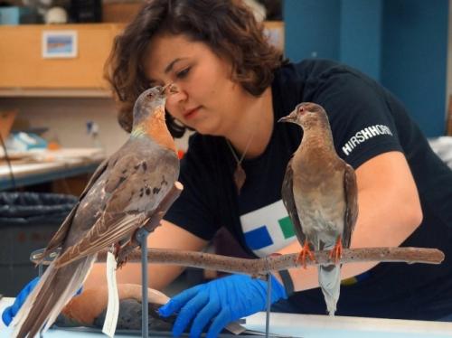 Martha the passenger pigeon