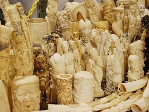 Confiscated illegal ivory products