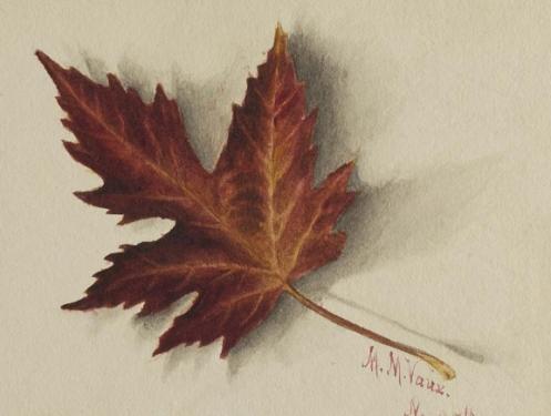 illustration of autumn leaf