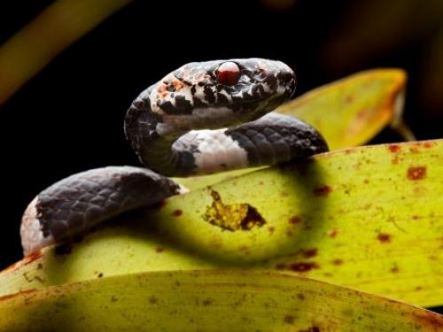snail-eating snake on leaf