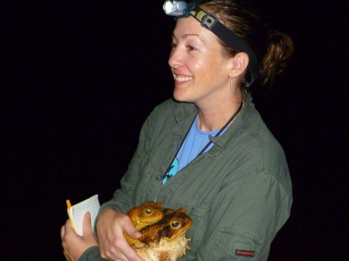 Crystal Kelehear collecting cane toads
