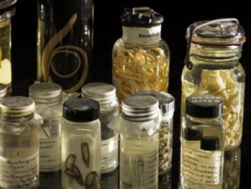 bottles of parasite specimans