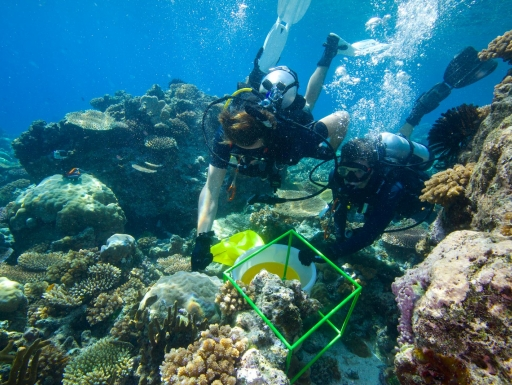 Biocube researchers in the Solomon Islands (Photograph by David Liittschwager)