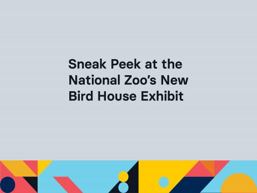 Sneak Peek at the National Zoo's New Bird House Exhibit
