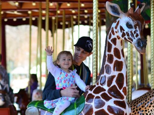zoo carousel