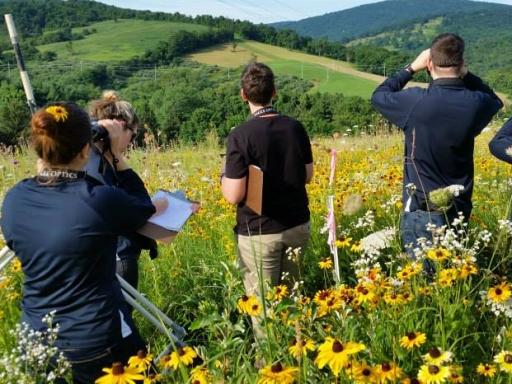 people survey in field of flowers