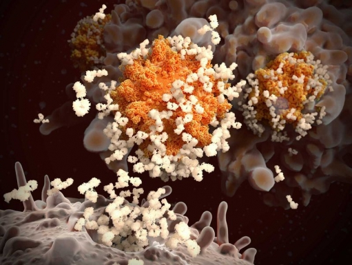 An illustration of antibodies responding to an infection by SARS-CoV-2, the virus that causes Covid-19 (Juan Gaertner / Science