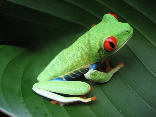 small green frog on leaf