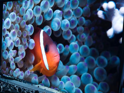 fish on screen.