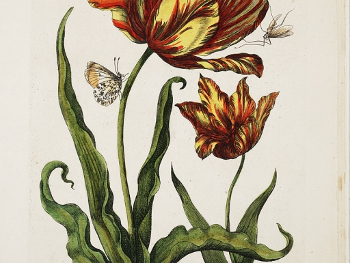 insects on a tulip