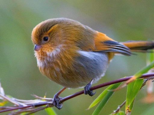 Bird perched on small wooden branch