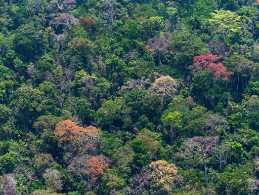 Aerial photo of tropical forest