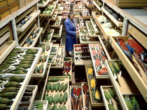 Woman stands amidst open archive collection of birds
