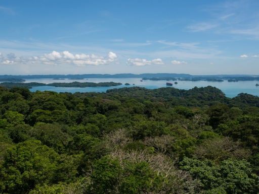 View of tropical forest with ocean in background