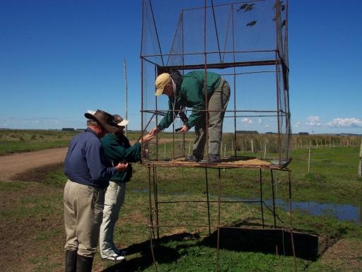 Researchers setting up mist nets