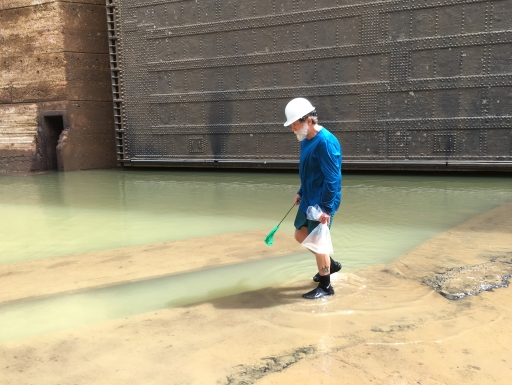 Scientist looking for fish in almost empty lock
