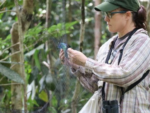 Researcher inspecting mist net