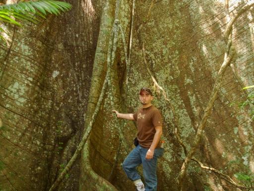 Man stands at base of big tree