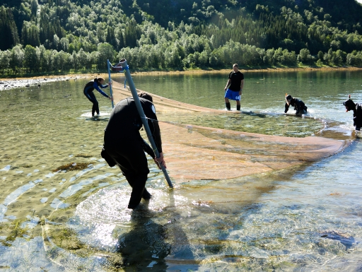 Team dragging net in shallow water