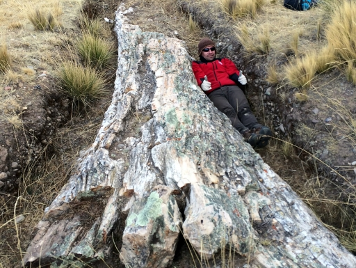 Person lying in trench next to fossil tree