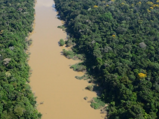 Aerial view of river and surrounding forest