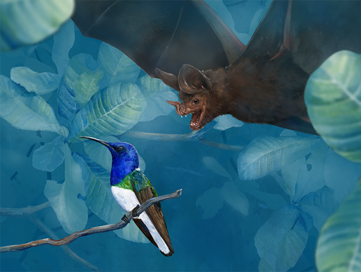 Illustration of bat diving at colorful bird